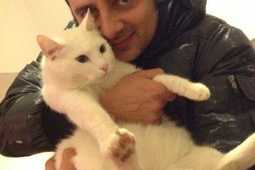 Gatto bianco Matisse