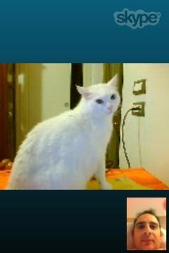 Matisse impara ad usare Skype